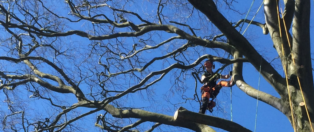Trees services North Yorkshire